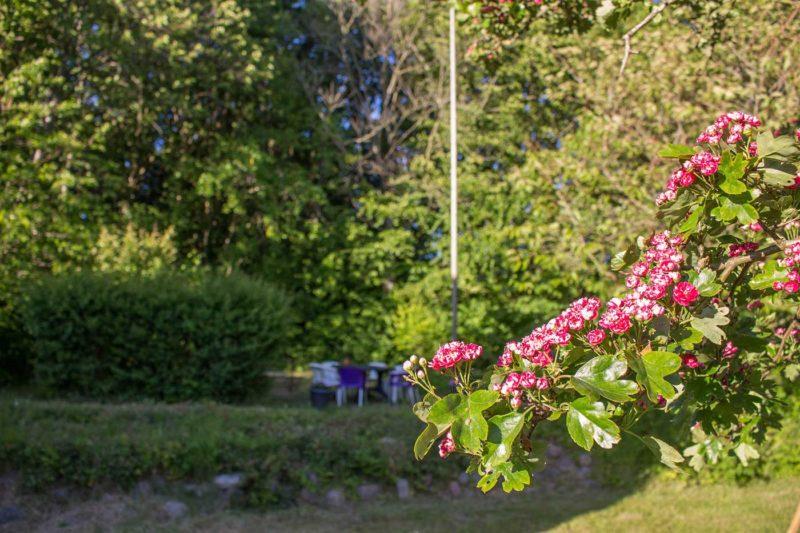 Et eksempel på de mange hjørner i haven hvor man kan nyde stedet